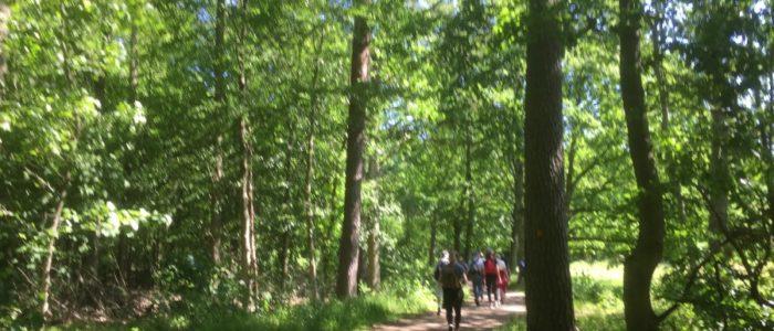 skog kullaberg